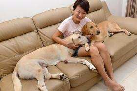 HER 'FUR-CHILDREN': Madam Karen Teng with her adopted ex-K-9 unit sniffer dogs Murphy (pale yellow) and Happy.