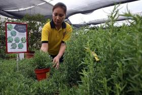 RESTOCKING: Far East Flora said it had to more than double the usual order for mosquitorepelling plants.