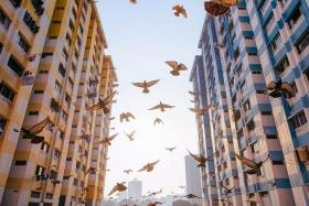 BIRD'S EYE VIEW: 