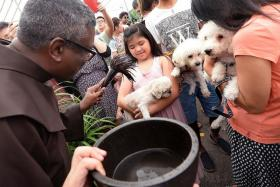 SPECIAL DAY: Father Clifford Augustine blessing three pet dogs.