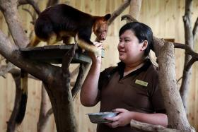 FURRY FRIENDS: (Above) Miss Rachel Yeo feeding two-year-old Makaia, a tree kangaroo.