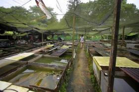 FOR SALE: The farm has about 27 tanks of fish to sell off before it can close.