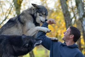 Host of Deadly 60, a BBC wildlife documentary programme for children, Steve Backshall gets playful with a wolf.