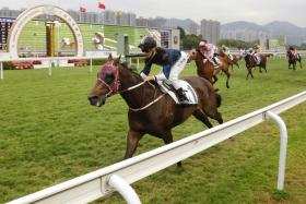 Bad Boy, part-owned by kungfu movie star Donnie Yen, is now targeted at the Group 3 Bauhinia Sprint Trophy after his impressive victory at Sha Tin on Saturday.