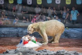 Happy 26th bear-thday to Singapore-born polar bear Inuka