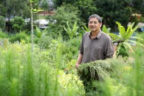 Mr Ng Kim Chuan is the main gardener.