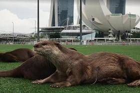 Injured otter spotted at Marina Bay