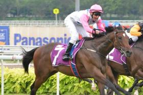 Debt Collector may be crowned as Singapore's Horse of the Year at today's Singapore Racing Awards gala night.