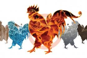 Rooster boosters: Celebs and the elements