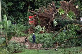 Woman killed by tree moved to Singapore for work in 2013