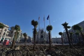 Palm trees set ablaze as dispute turns racist