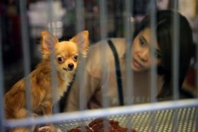 Tighter licensing rules for pet businesses from April 1