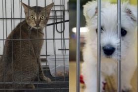 Taiwan bans eating dogs and cats