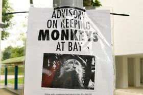 Cameras set up to catch elusive monkey