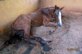 Gallop Stable fined $9,000 for animal cruelty