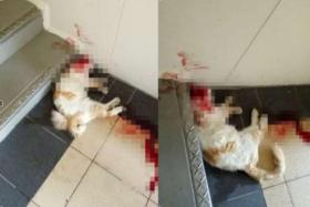 A house cat found dead at a stair landing at Bukit Batok West Avenue 7.