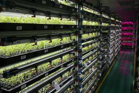 Panasonic to double vegetable production