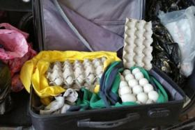 """A 40-year-old man was fined $5,000 for illegally importing 148 """"balut"""" eggs into Singapore for sale."""