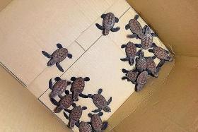TNP reader gets $100 voucher for calling hotline about turtles