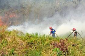 Only about 20,000ha of land have been burned this year, a fraction of the 438,000ha razed in 2016.