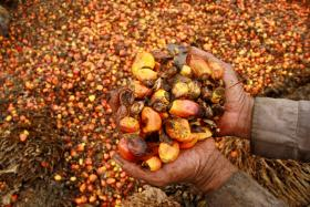 Buyers urge firms to use sustainable palm oil