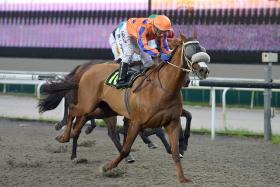 Clutha Lad should step up on his last-start fourth to score tonight.