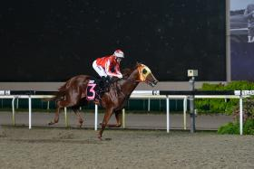 Nova Swiss (above, in one of his five victories) led all the way in his trial at Kranji yesterday morning.