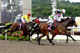 Gran Torino (No. 2) making a winning debut with jockey Olivier Placais astride on Aug 20.
