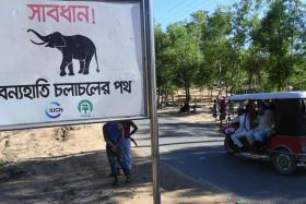 Wild elephants trample four Rohingya refugees to death