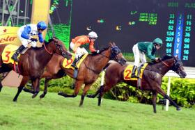 Gilt Complex (No. 2) gets up in the nick of time to deny Bahana (No. 9) of a back-toback Dester Singapore Gold Cup double by a nose at Kranji yesterday, with the winner's stablemate Elite Excalibur finishing third, a short head away.