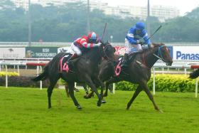 Lucky Stride (No. 6) in one of his three wins with jockey Derreck David astride.