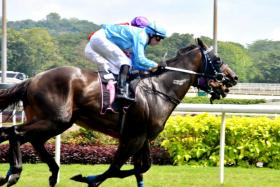 Chairman (No. 1) beats $200 outsider Easter Mate (obscured) by a head in the Class 3 race over 1,600m in Race 3 at Kranji yesterday.