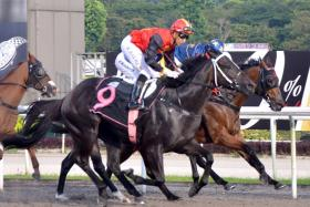 Nowyousee (No. 9) is heading for a winning hat-trick from as many starts on his trial victory at Kranji yesterday morning.