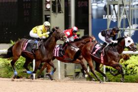 Mokastar (No. 7) getting up to score his third victory from 10 starts in Race 7 at Kranji yesterday.