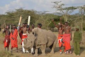 Last male northern white rhino dies in Kenya: keepers