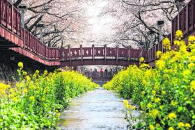 Springtime in South Korea