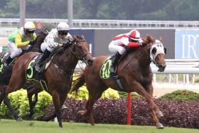 Imperium (No. 5) winning a Restricted Maiden race over 1,200m on Feb 17.