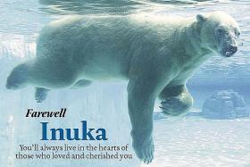 No more polar bears in Singapore: Wildlife Reserves
