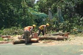 Falling tree crushes Ulu Pandan CC's fence