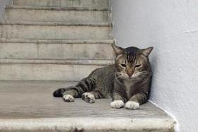 Tiong Bahru residents band together to help ailing stray cat