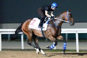 Hong Kong's Southern Legend working on the Polytrack yesterday.