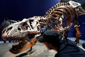 Real-life 67 million-year-old T.rex goes on show in Paris museum