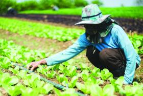 Pasar Organic offers fresh veggies at best value and quality