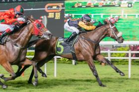 Mr Fantastic (B Vorster astride) staving off race favourite, Super Fortune, in Friday night's Race 6 at Kranji.