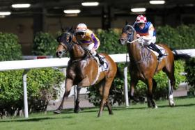 Zac Purton taking the Class 3 Let Me Fight Handicap aboard the Michael Chang-trained Saul's Special at Happy Valley on Wednesday night.