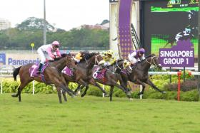 Debt Collector (No. 7) winning the 2016 Raffles Cup with Michael Rodd up.