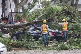 Tall tree falls in Hougang carpark, damaging four cars