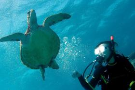 Scuba diving may be the workout for you