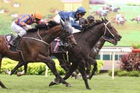 King Louis (No. 7) getting up on the line to give trainer Ricardo Le Grange his 100th Kranji winner on Sunday.