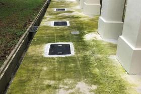 Algae growth on concrete flooring at Woodlands HDB blocks